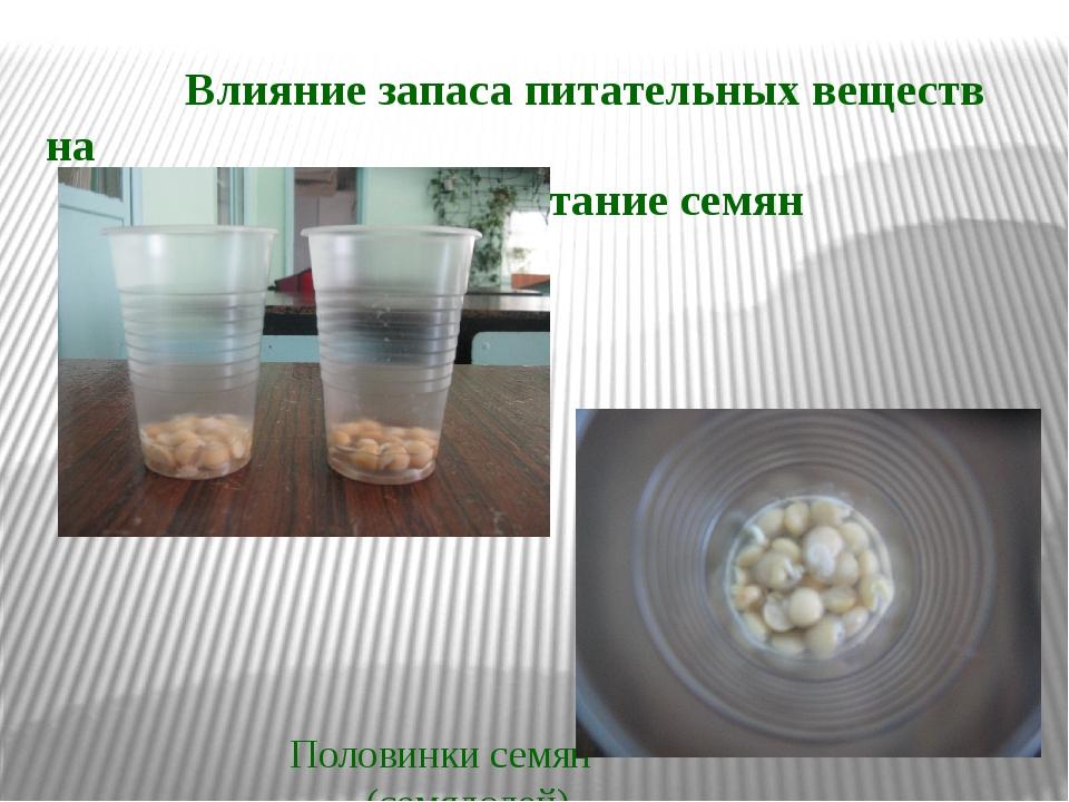 Влияние запаса питательных веществ на прорастание семян Половинки семян (сем...