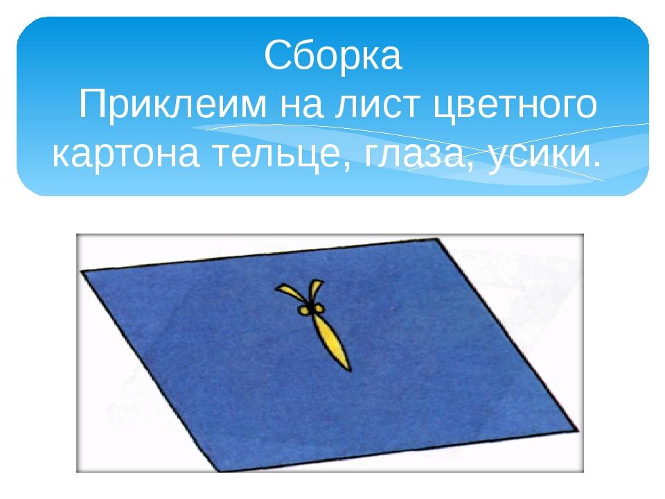 Сборка Приклеим на лист цветного картона тельце, глаза, усики.