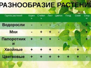 РАЗНООБРАЗИЕ РАСТЕНИЙ Группа растений Корень Стебель Лист Цветок Плод Семя Сп