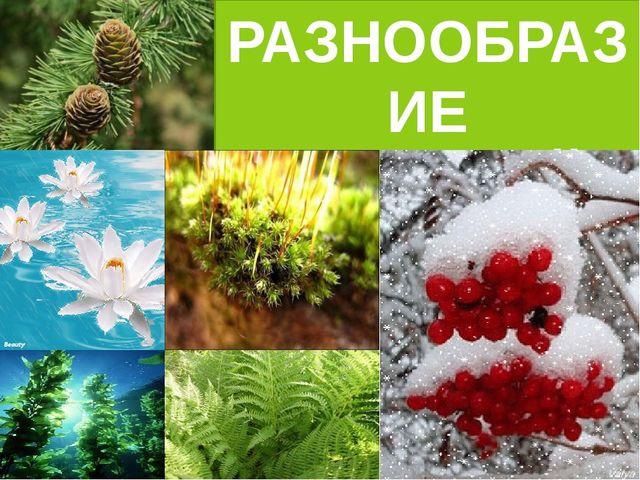 Конспект урока разнообразие растений 3 класс