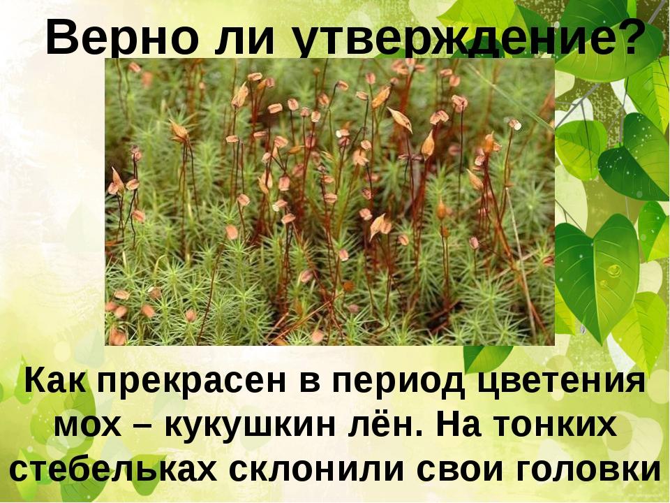 Верно ли утверждение? Как прекрасен в период цветения мох – кукушкин лён. На...