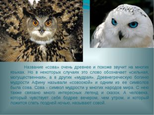 Название «сова» очень древнее и похоже звучит на многих языках. Но в некотор