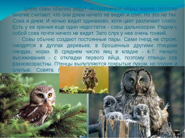 Днем совы обычно ведут неподвижный образ жизни, поэтому многие считают, что...