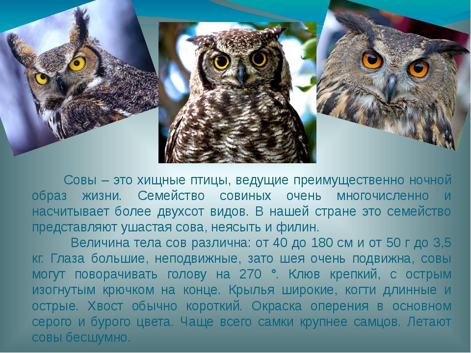 Совы – это хищные птицы, ведущие преимущественно ночной образ жизни. Семейст...