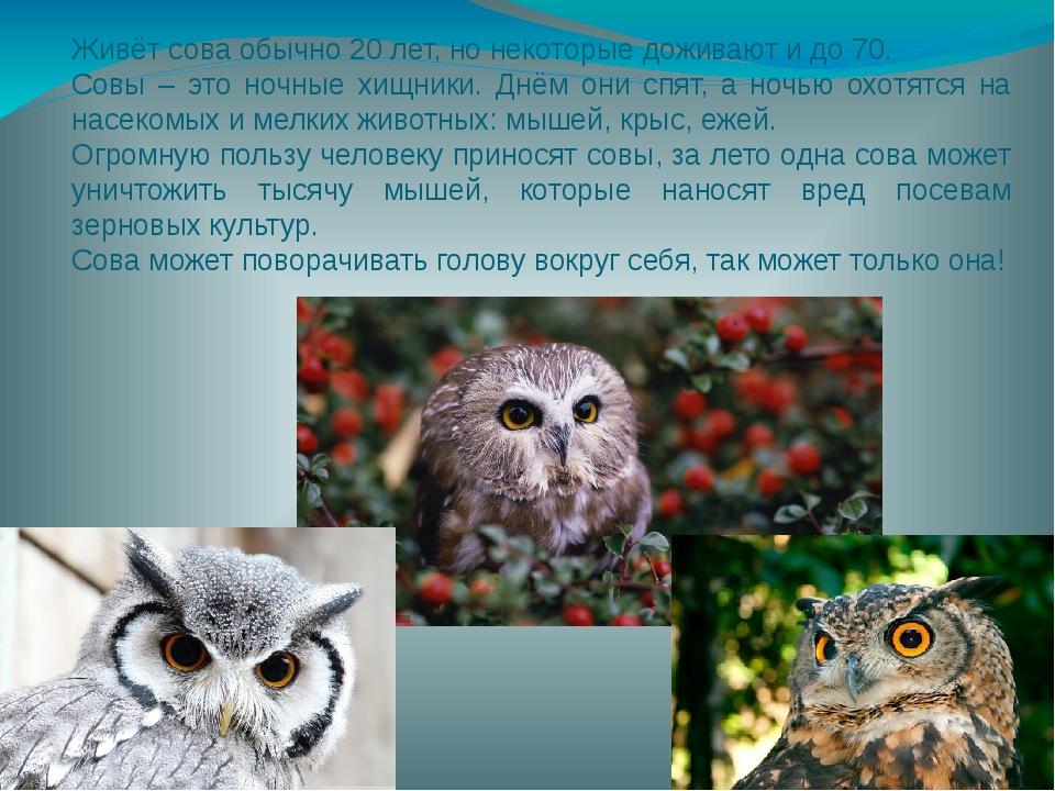 Живёт сова обычно 20 лет, но некоторые доживают и до 70. Совы – это ночные х...