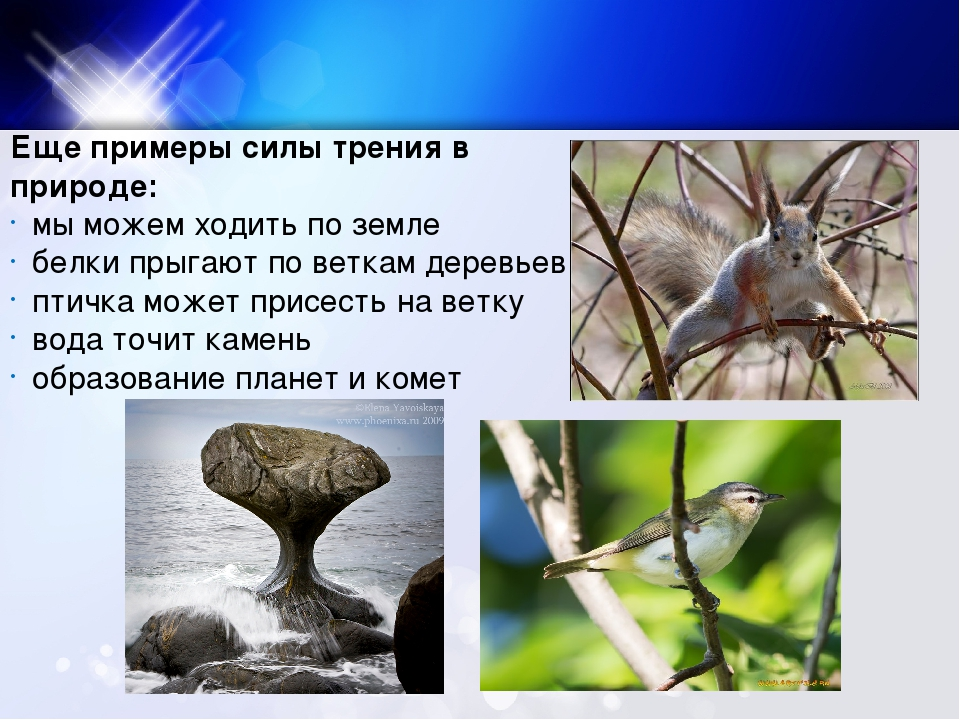 Еще примеры силы трения в природе: мы можем ходить по земле белки прыгают по...