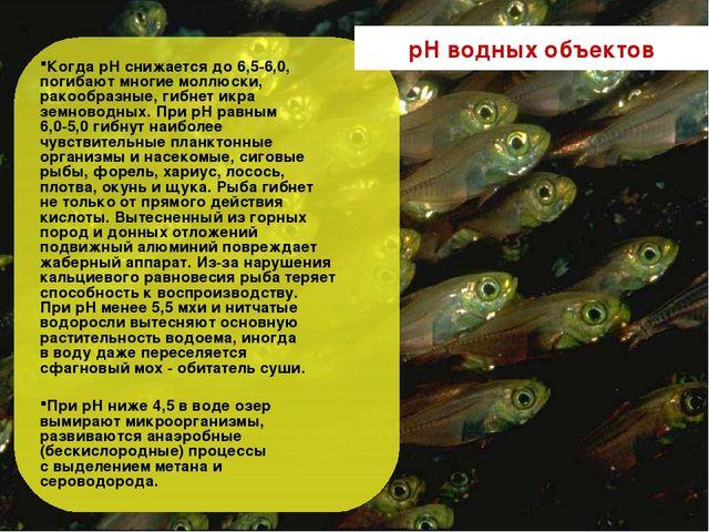 Когда рН снижается до 6,5-6,0, погибают многие моллюски, ракообразные, гибнет...