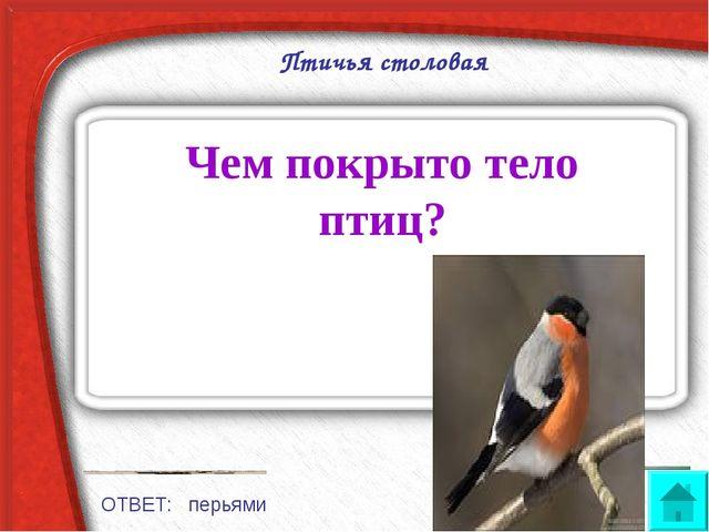 Птичья столовая Чем покрыто тело птиц? ОТВЕТ: перьями
