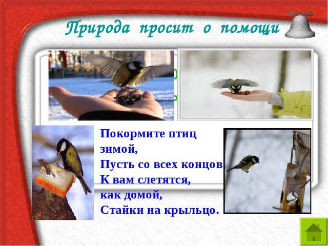 Природа просит о помощи Что птицам страшнее холод или голод зимы? Покормите п...
