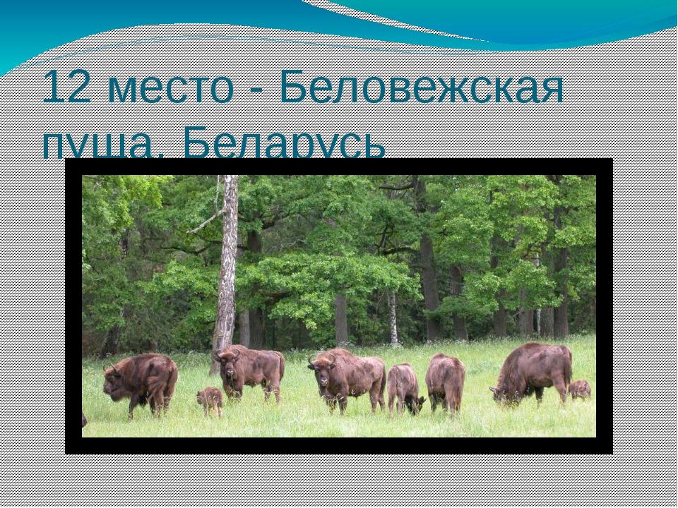 12 место - Беловежская пуща, Беларусь