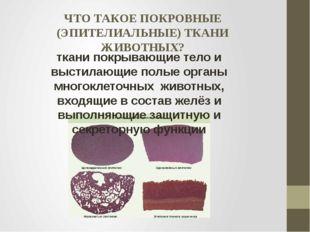ЧТО ТАКОЕ ПОКРОВНЫЕ (ЭПИТЕЛИАЛЬНЫЕ) ТКАНИ ЖИВОТНЫХ? ткани покрывающие тело и