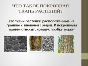 ЧТО ТАКОЕ ПОКРОВНАЯ ТКАНЬ РАСТЕНИЙ? это ткани растений расположенные на грани