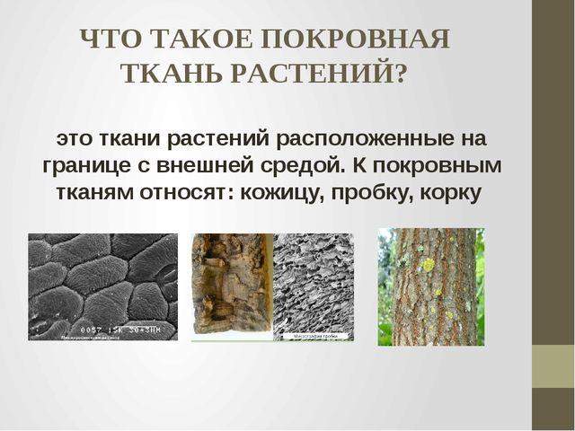 ЧТО ТАКОЕ ПОКРОВНАЯ ТКАНЬ РАСТЕНИЙ? это ткани растений расположенные на грани...