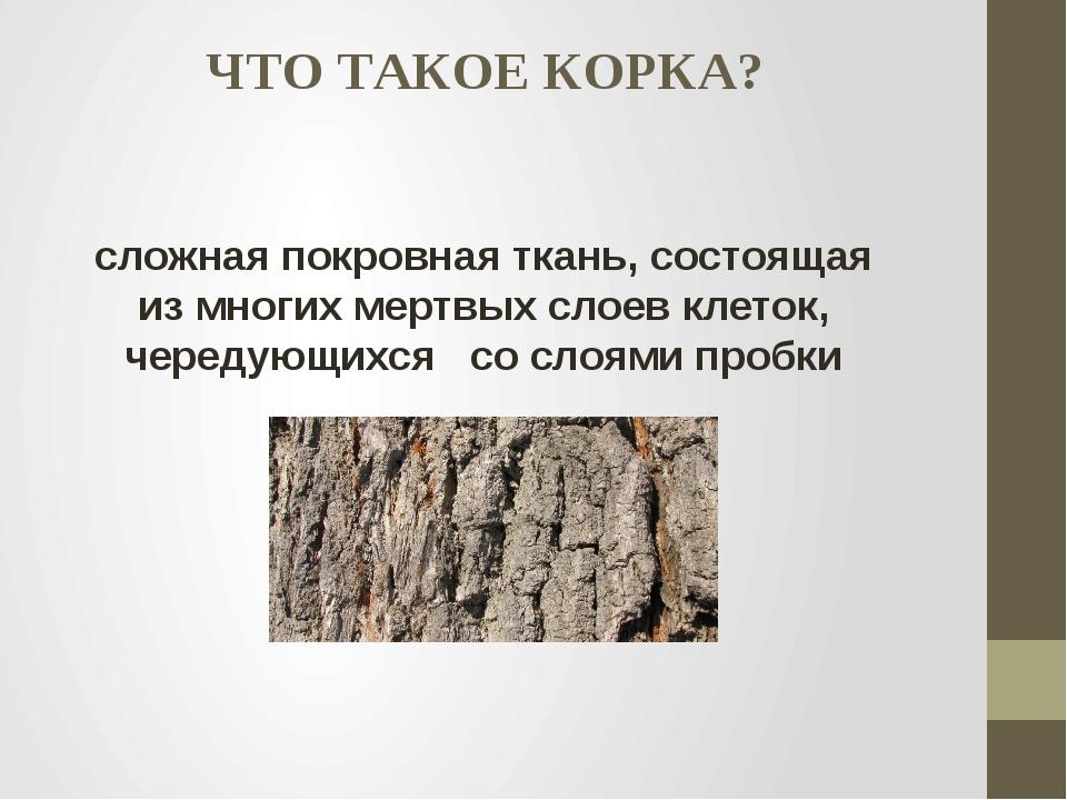 ЧТО ТАКОЕ КОРКА? сложная покровная ткань, состоящая из многих мертвых слоев к...