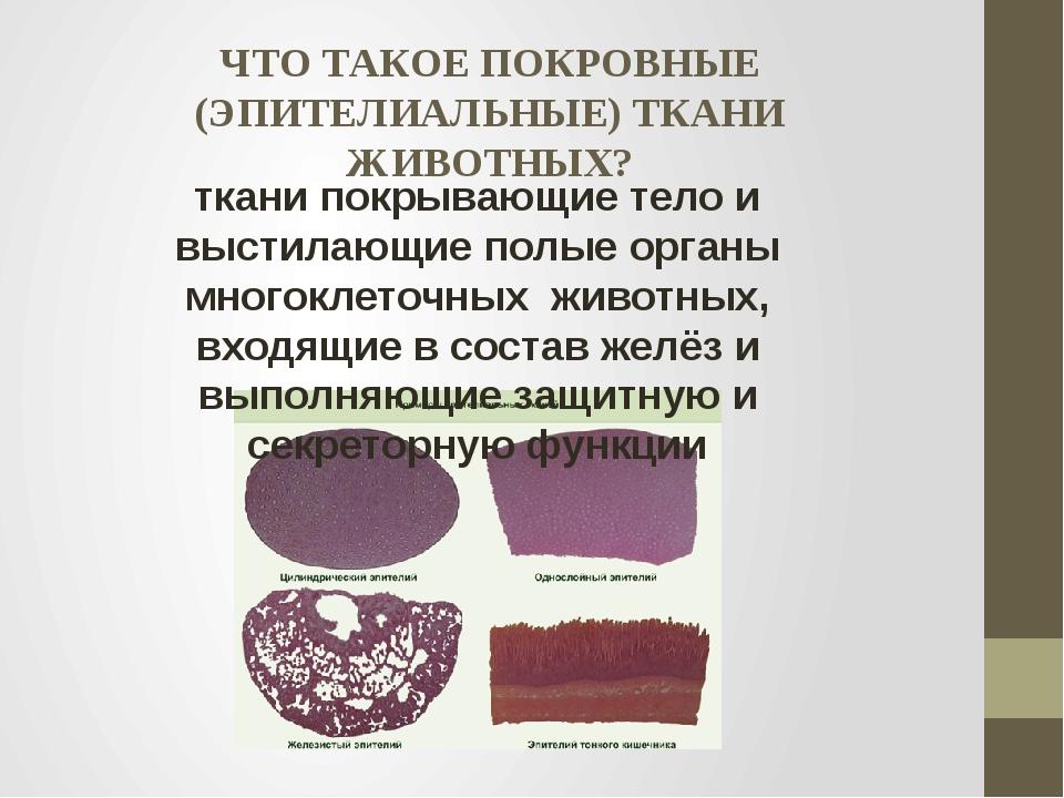 ЧТО ТАКОЕ ПОКРОВНЫЕ (ЭПИТЕЛИАЛЬНЫЕ) ТКАНИ ЖИВОТНЫХ? ткани покрывающие тело и...