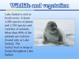 Lake Baikal is rich in biodiversity. It hosts 1,085 species of plants and 1,5