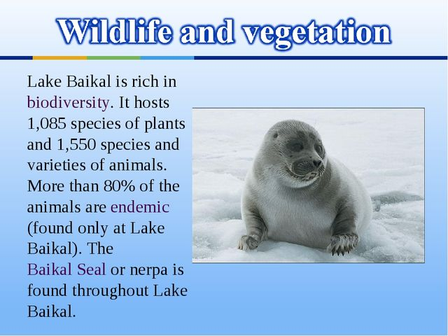 Lake Baikal is rich in biodiversity. It hosts 1,085 species of plants and 1,5...