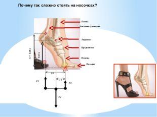 Почему так сложно стоять на носочках? Ахиллово сухожилие Голень Плюсна Пальцы
