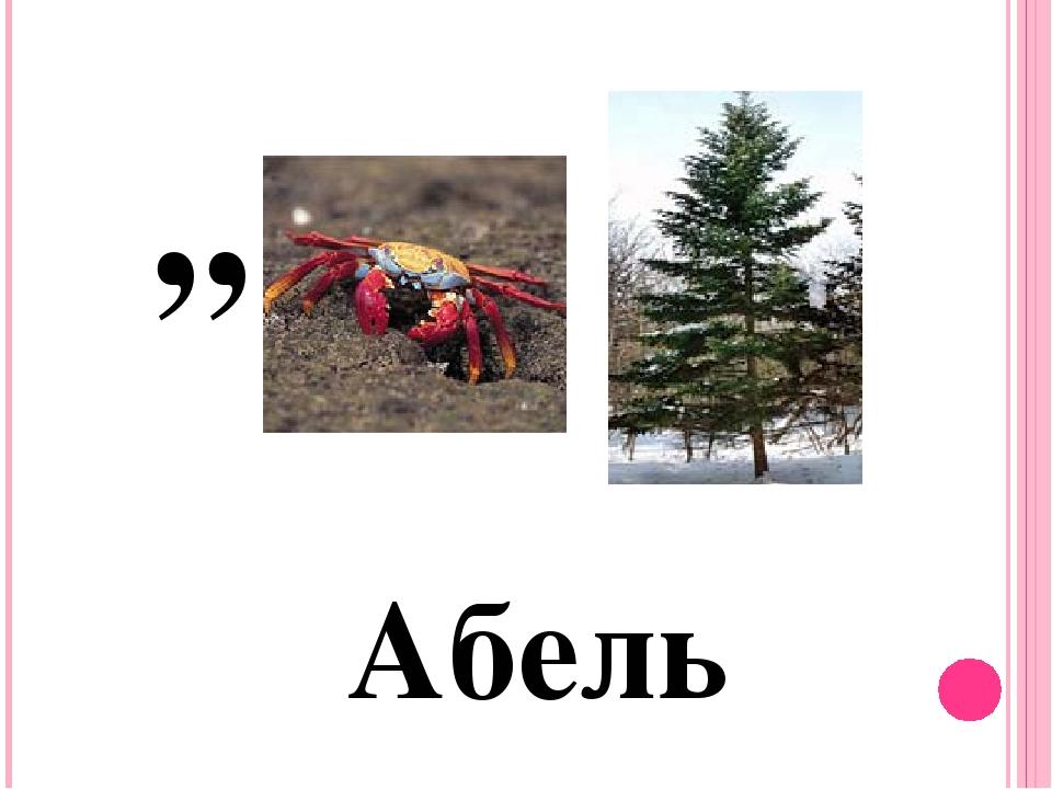 Абель ,,