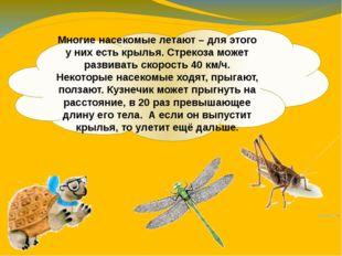Многие насекомые летают – для этого у них есть крылья. Стрекоза может развива