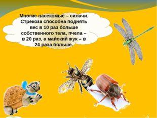 Многие насекомые – силачи. Стрекоза способна поднять вес в 10 раз больше собс