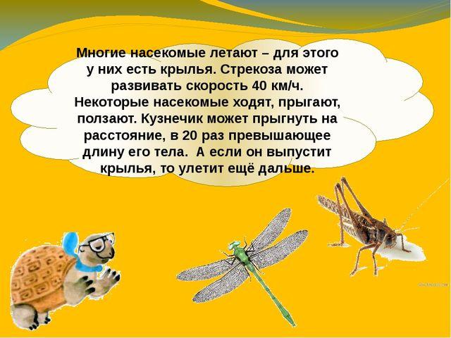 Многие насекомые летают – для этого у них есть крылья. Стрекоза может развива...