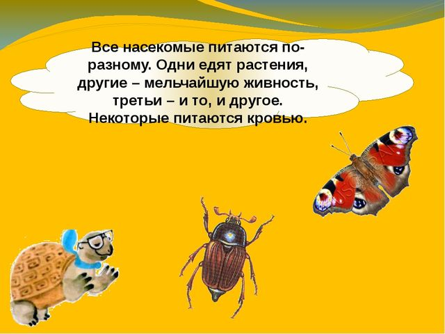 Все насекомые питаются по-разному. Одни едят растения, другие – мельчайшую жи...