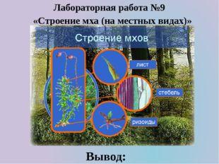 «Строение мха (на местных видах)» Лабораторная работа №9 Вывод: