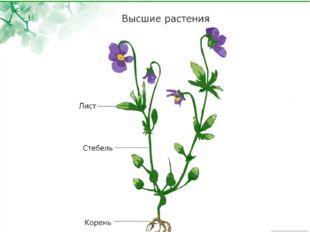 Ботаника – наука о растениях Царство Растений 1.одно- и многоклеточные орган