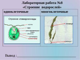Лабораторная работа №8 «Строение водорослей» Вывод :_________________________