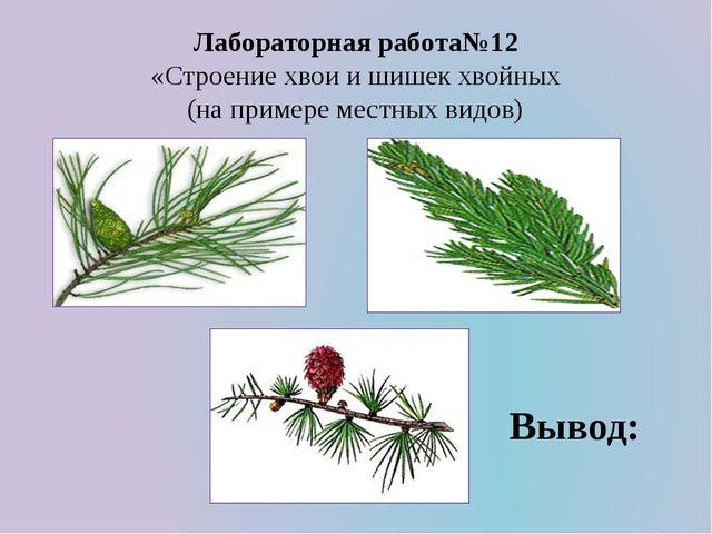 Лабораторная работа№12 «Строение хвои и шишек хвойных (на примере местных вид...