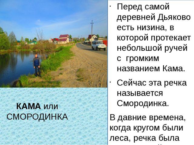 КАМА или СМОРОДИНКА Перед самой деревней Дьяково есть низина, в которой проте...