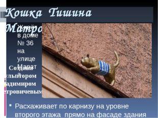Кошка Тишина Матроскина Живёт в доме № 36 на улице Марата Расхаживает по карн