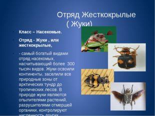 Отряд Жесткокрылые ( Жуки) Класс – Насекомые. Отряд - Жуки , или жесткокрылы