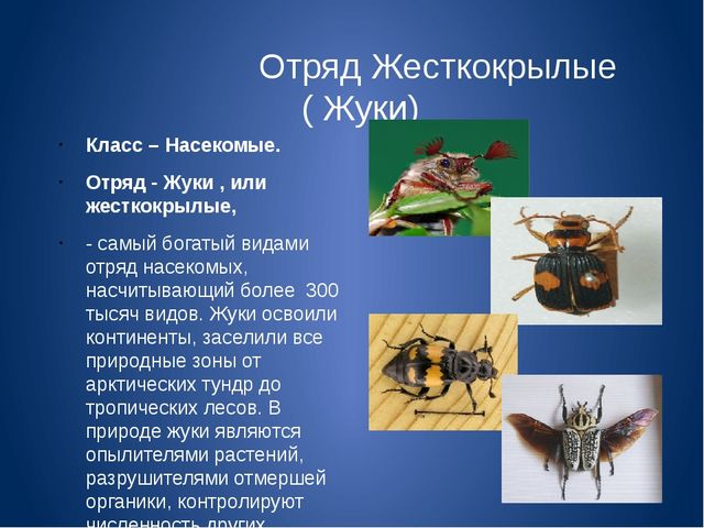 Отряд Жесткокрылые ( Жуки) Класс – Насекомые. Отряд - Жуки , или жесткокрылы...