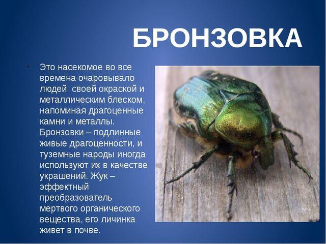 БРОНЗОВКА Это насекомое во все времена очаровывало людей своей окраской и ме...