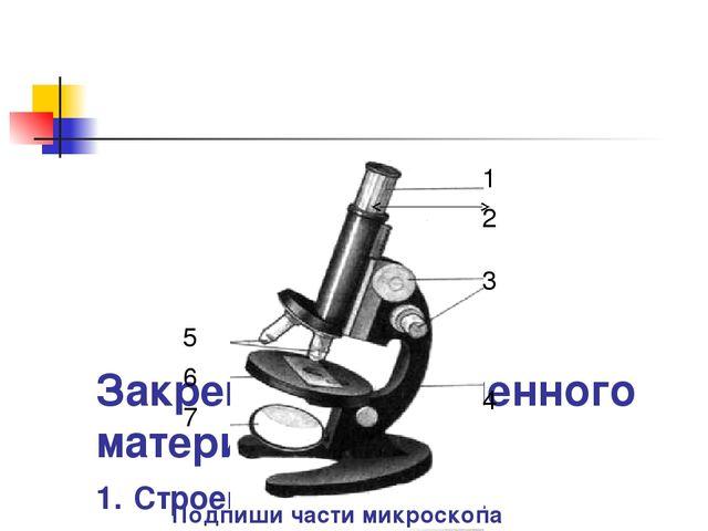 Закрепление изученного материала. 1. Строение микроскопа. 1 2 3 4 5 6 7 Подп...