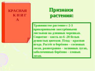 Признаки растения: Травянистое растение с 2-3 прикорневыми заострёнными листь