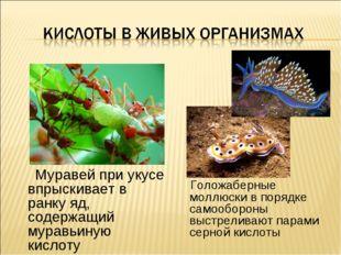 Муравей при укусе впрыскивает в ранку яд, содержащий муравьиную кислоту Голо