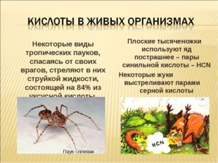 Некоторые виды тропических пауков, спасаясь от своих врагов, стреляют в них