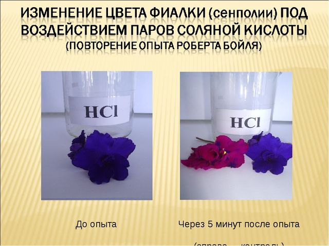 До опыта Через 5 минут после опыта (справа – контроль)