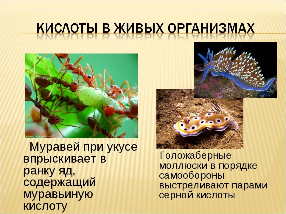 Муравей при укусе впрыскивает в ранку яд, содержащий муравьиную кислоту Голо...