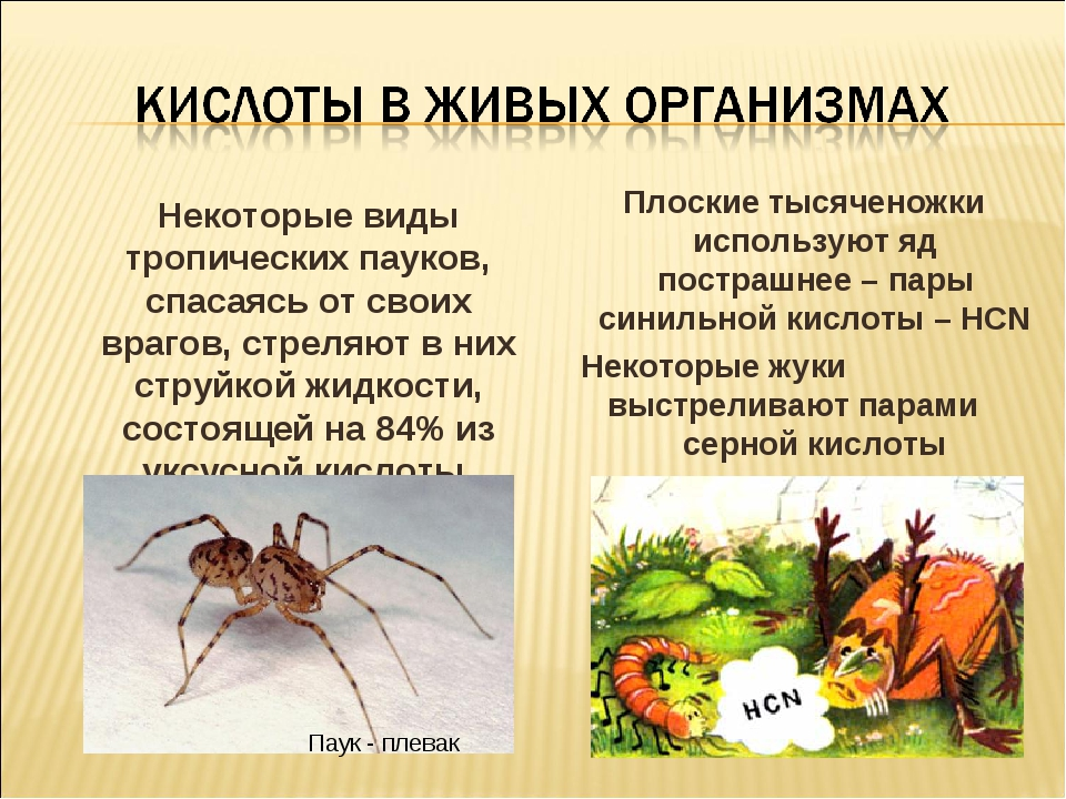 Некоторые виды тропических пауков, спасаясь от своих врагов, стреляют в них...