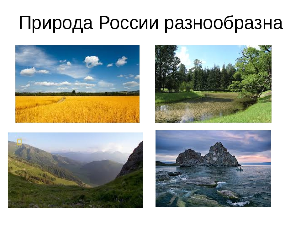Природа России разнообразна