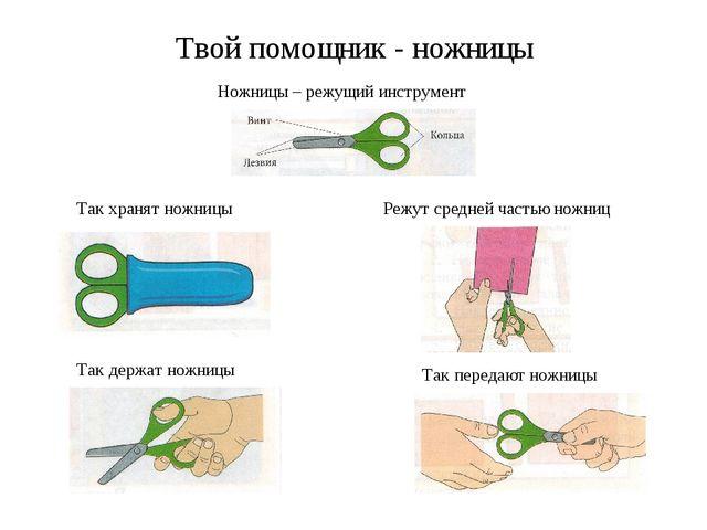 Твой помощник - ножницы Ножницы – режущий инструмент Так хранят ножницы Так д...