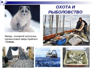 ОХОТА И РЫБОЛОВСТВО Песец - основной охотничье- промысловый зверь Крайнего Се