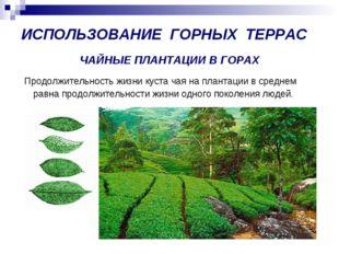 ЧАЙНЫЕ ПЛАНТАЦИИ В ГОРАХ Продолжительность жизни куста чая на плантации в сре