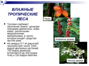 ВЛАЖНЫЕ ТРОПИЧЕСКИЕ ЛЕСА Тропики снабжают население Земли ценными породами др
