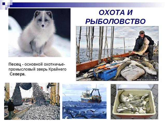 ОХОТА И РЫБОЛОВСТВО Песец - основной охотничье- промысловый зверь Крайнего Се...
