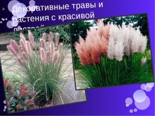 Декоративные травы и растения с красивой листвой